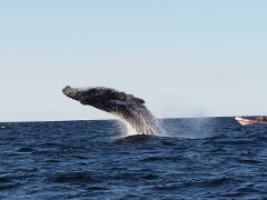 New South Whale Watching