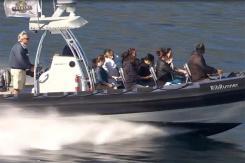Ocean Runner Dolphin Tour