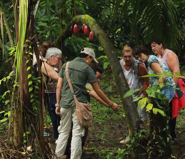 Arenal COMBO Chocolate Tour La Fortuna Waterfall Hike