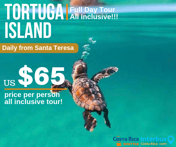 Tortuga Island Full Day Tour from Santa Teresa