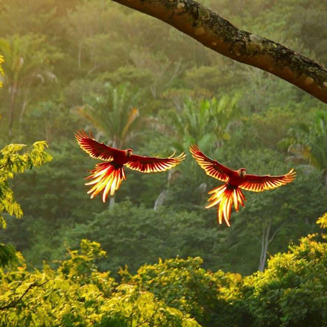Tamarindo Tours: Early Bird Watching Tour