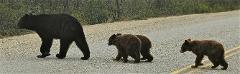 THE BEAR HUNT OPTION