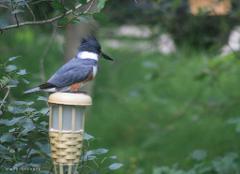 BIRDWATCHING GETAWAY