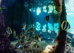 Guided Outer Reef Snorkelling Expedition