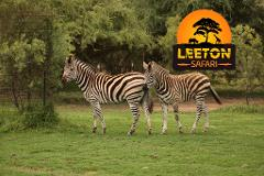 Leeton Safari - 2 night package
