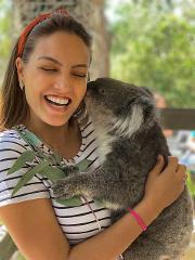 Cuddle a Koala (private)