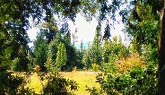 Easter Arboretum Tour