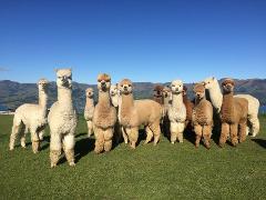Alpaca Farm Tour Gift Voucher