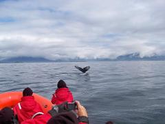Alaska Wildlife Safari by Boat and ATV