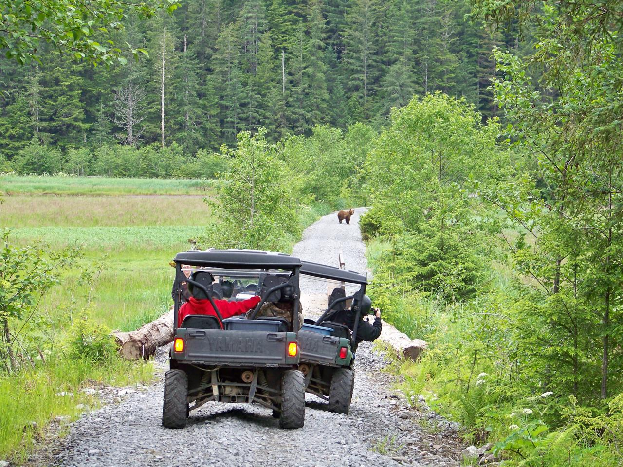 Alaska ATV Wildlife Safari