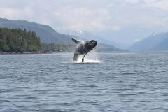 Marine Wildlife Quest in Sitka Sound Whales, Otters And Breathtaking Scenery