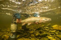 Wild Alaskan Steelhead On The Fly