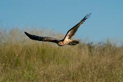 Hawk Experience - Standard