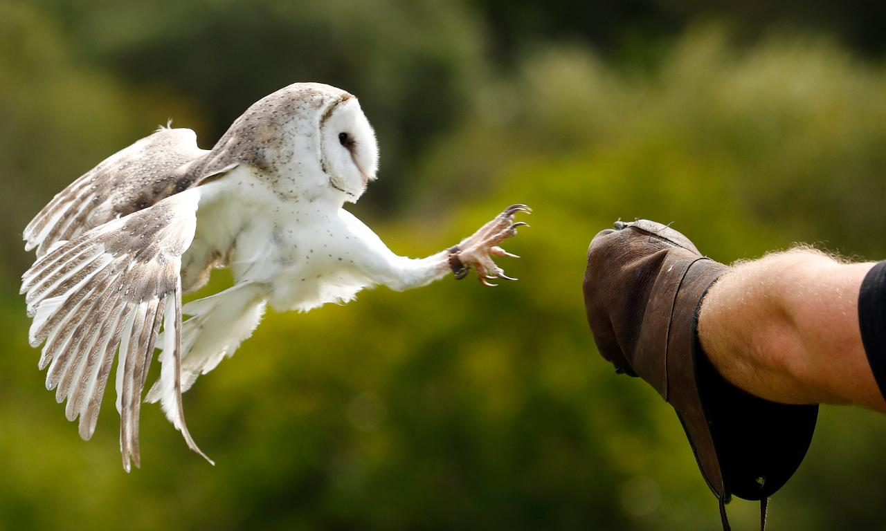 Owl Experience - Premium