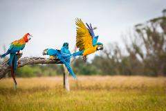 Train your Pet Parrot - Bird Training Sessions (30min Sessions)