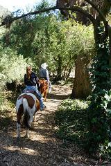 60 Minute Trail Ride - Golden Gate Park