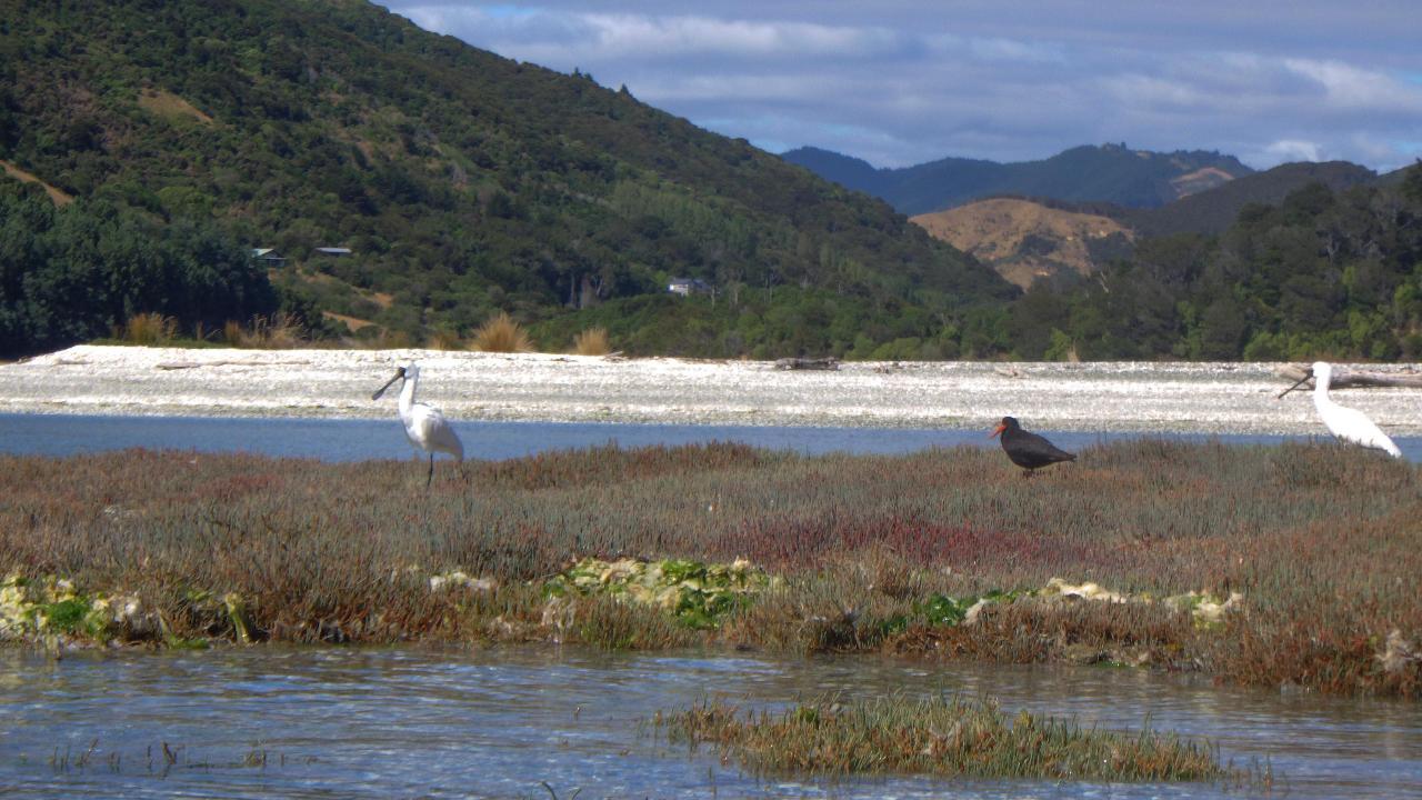 Serene Estuary Eco Tour