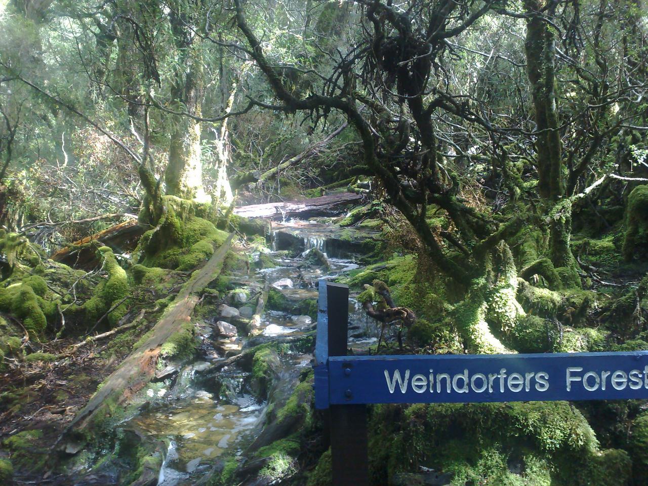 3Day West Coast-Wilderness- Tour