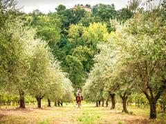 Horseback Riding in Chianti Vineyards