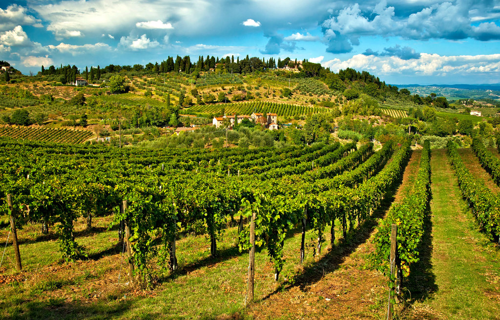 Roman Countryside Vineyards and Wine Tasting
