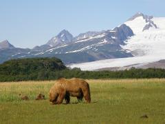 Bear Viewing - Chinitna Bay