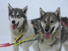 Anchorage Dog Sledding Tour