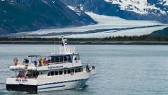 Kenai Fjords Gray Whale Tour Self-driving