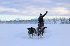 Anchorage 1/2 Day Mushing School