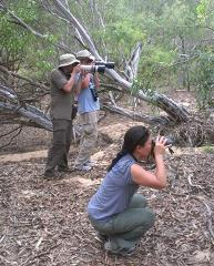 Best of Top End Birding August 6-14,  ext 15-18, 2018 FULLY BOOKED