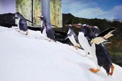 SEA LIFE Sydney Aquarium - Daily Offpeak