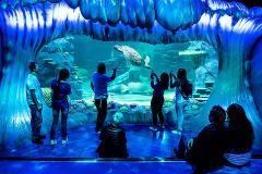 SEA LIFE Sydney Aquarium - Daily Peak