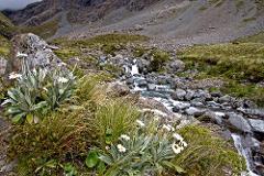 Arthurs Pass Alpine Flora and Wildlife Tour
