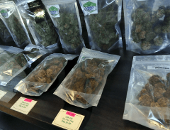Kingston Cannabis Shopping Tour and Usain Bolt's Tracks & Records from Kingston