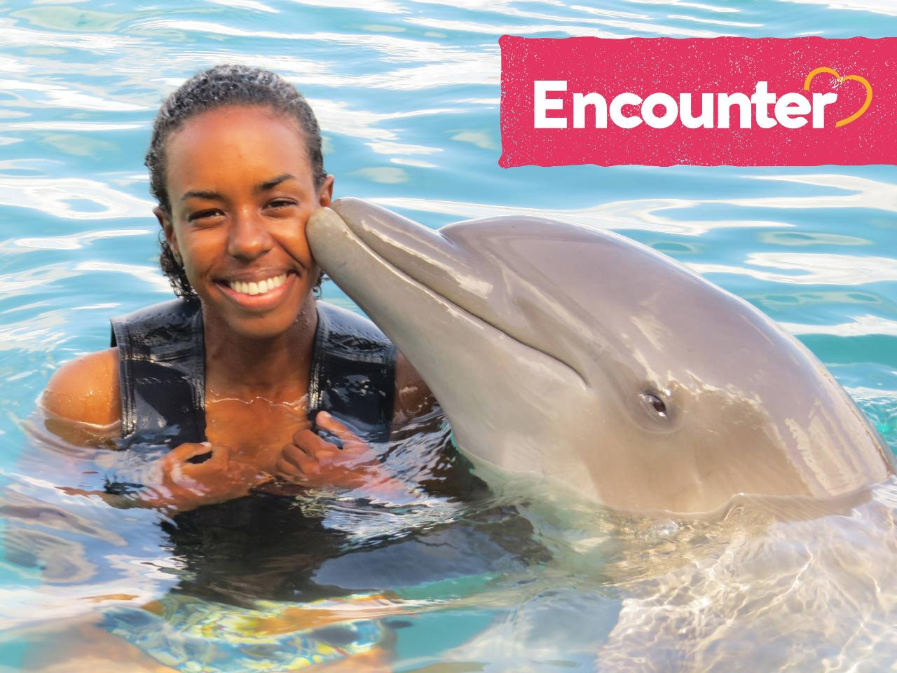 Dolphin Encounter Tour from Kingston