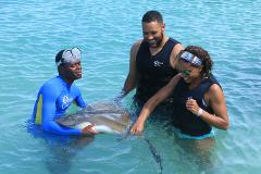 Dolphin Encounter Tour at Dolphin Cove Ocho Rios from Montego Bay