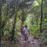 Trinidad Adventure Hikes from Port of Spain