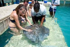 Stingray Encounter And Snorkel Adventure at Blue Lagoon from Nassau