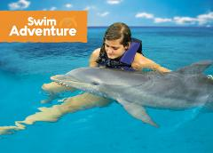 Dolphin Swim Adventure Tour from Runaway Bay