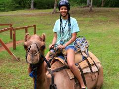 Camel Outback Adventure Tour from Montego Bay