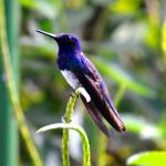 Humming Bird Experience