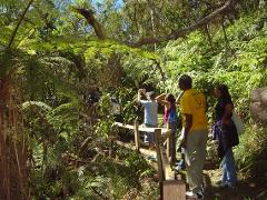 Jamaica's Blue Mountain Hike & Coffee Tour from Kingston