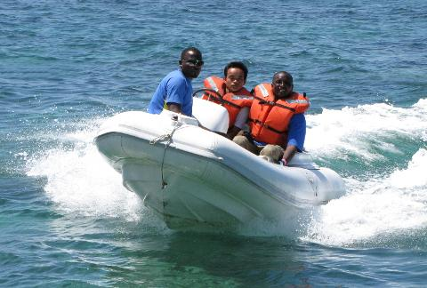 Dolphin Cove Tour from Ocho Rios