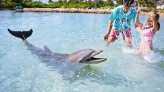 Atlantis Dolphin Shallow Water Interaction at Dolphin Cay from Nassau
