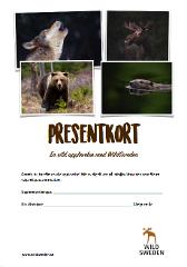 Presentkort Björnskådning från gömsle nära Bollnäs