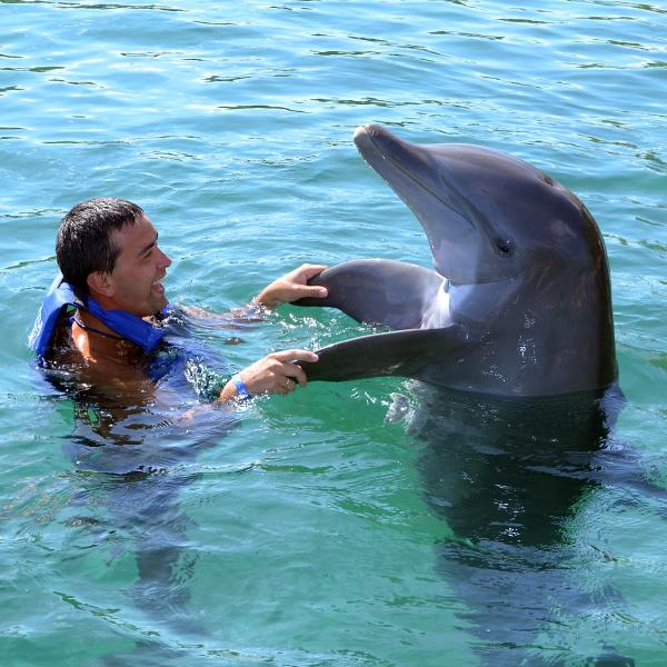 Dolphins Swim With 1 Dolphin