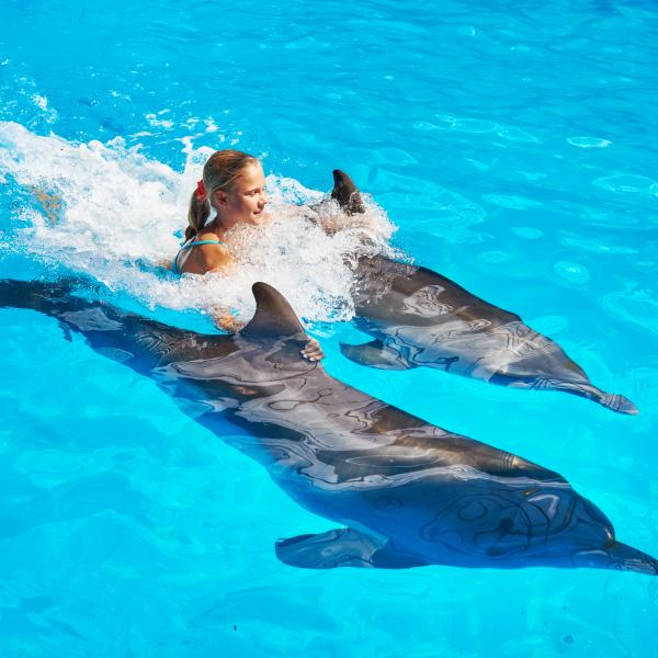 Dolphins Swim With 2 Dolphins