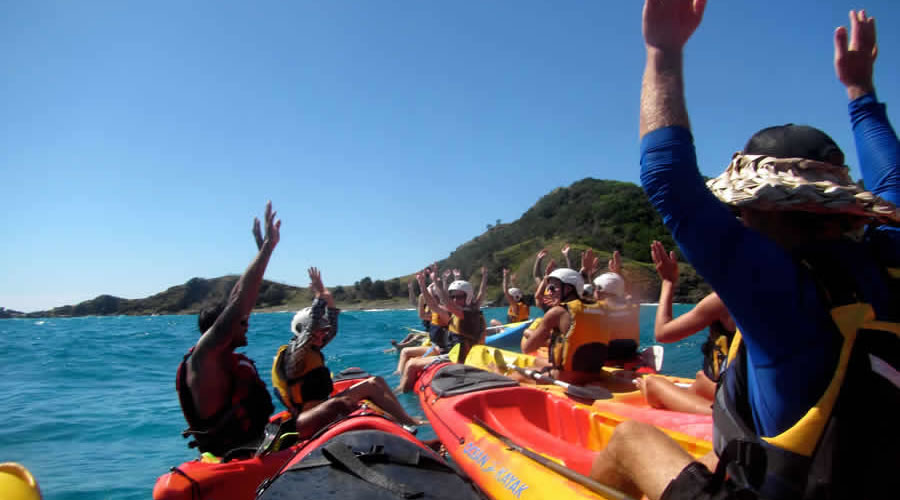 Kayaking with Whales and Dolphins