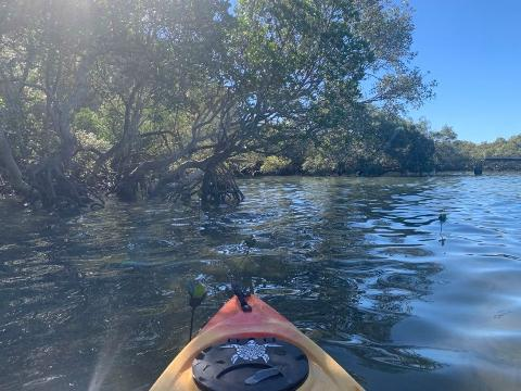 Ormiston Mangrove Kayak Tour
