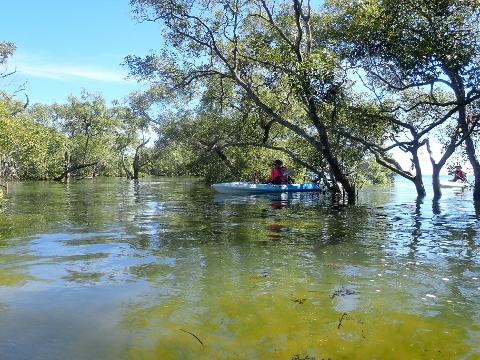 Wellington_Point_Mangroves_Kayak