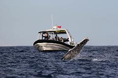 Coastal Express 2HR Whale Watching Experience Gift Voucher